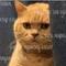 nonton-video-kucing-ternyata-bermanfaat-kabel-kabarsekelebat