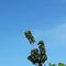 foto-pohon-dengan-dedaunan