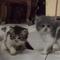 kode-kode-kucing-yang-sering-diabaikan