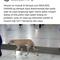 bawa-anjing-masuk-masjid-sm-resmi-tersangka-penistaan-agama