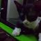 freddie-mercury-dan-romantismenya-dengan-kucing