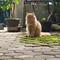 ekspresi-kucing-bikin-ngakak-salah-satunya-mecahin-telur-malah-santuy-bosque