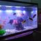 aquarium-thingy-for-starter-dari-newbie-untuk-newbie---part-1
