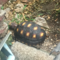 93787769378776937-all-about-tortoise-93787769378776937---part-3