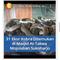 viral-31-anak-kobra-di-dalam-masjid-at-taqwa-mojolaban-kapan-masuk-induknya