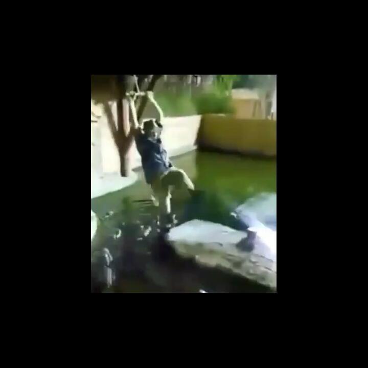 Mengerikan, Video Detik-detik Petugas Kebun Binatang Tercebur ke Kolam Penuh Buaya!