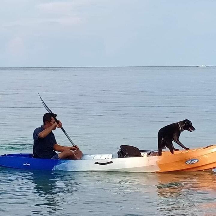 Mengiris Hati, Kisah Anjing yang Mati untuk Wisata Halal di Aceh