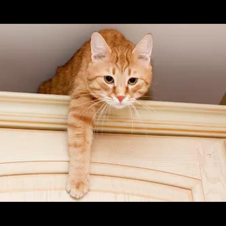 Butuh Ketenangan, Alasan Kucing Suka Manjat ke Atas Lemari!