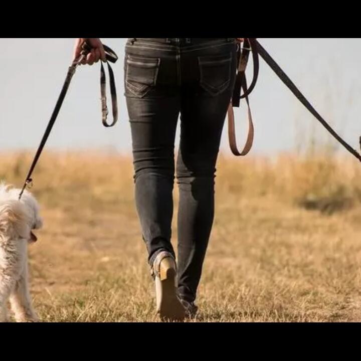 Tewas Karena Kotoran Anjing, Perhatikan Hal Ini Saat Mengajak Anjingmu Jalan-jalan!