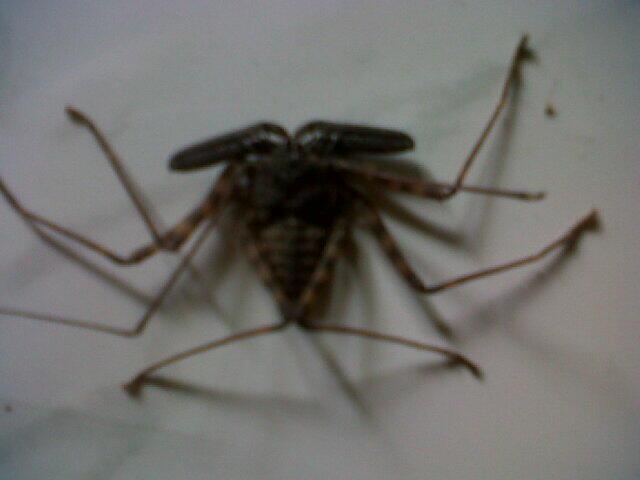 apakah laba-laba ini piknik ke jogja??