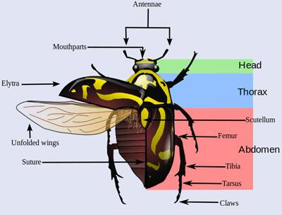 World of Coleoptera