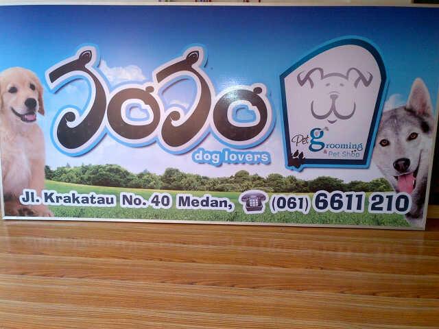 Jojo Petshop Medan - dogfood,shih tsu,golden,husky