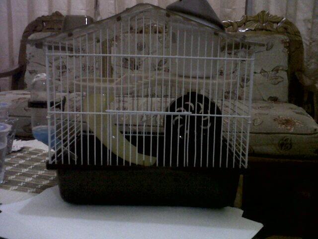 Kandang Hamster (Bonus Inside)