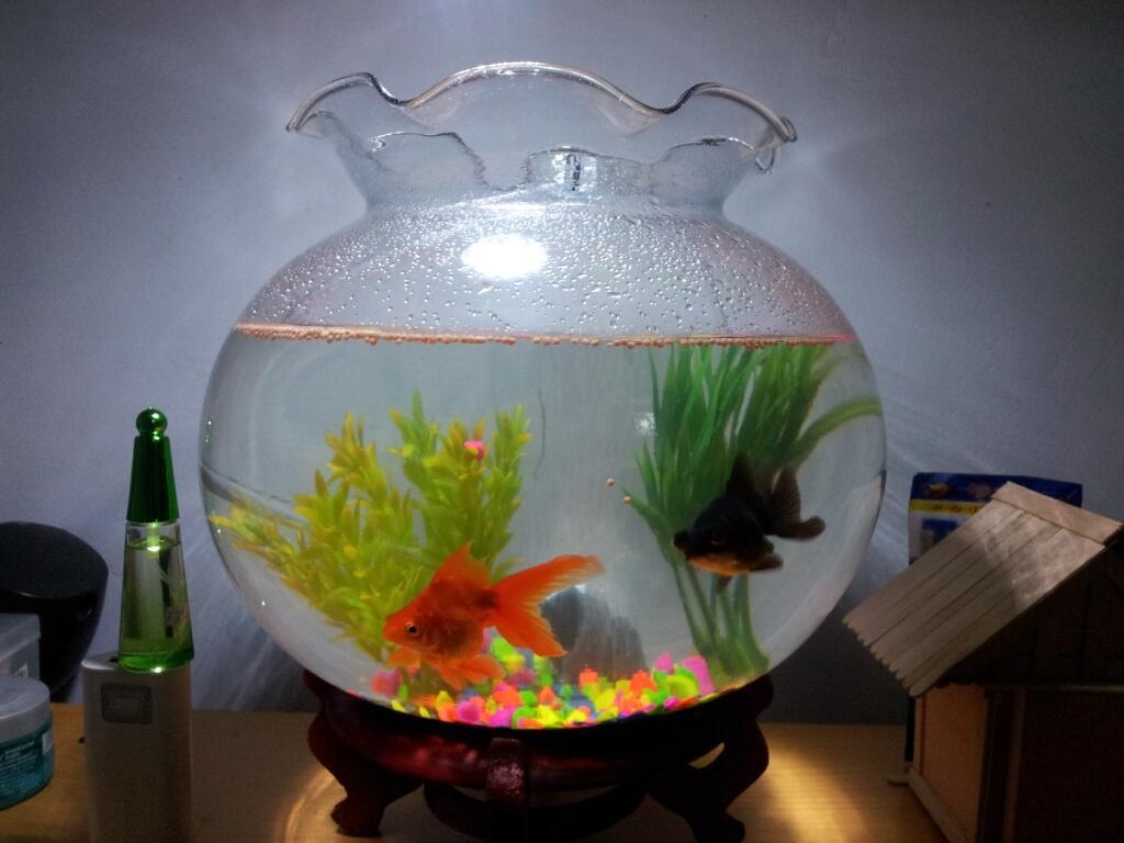Aquarium Cepat Kotor Tanya Ttg Filter Kaskus