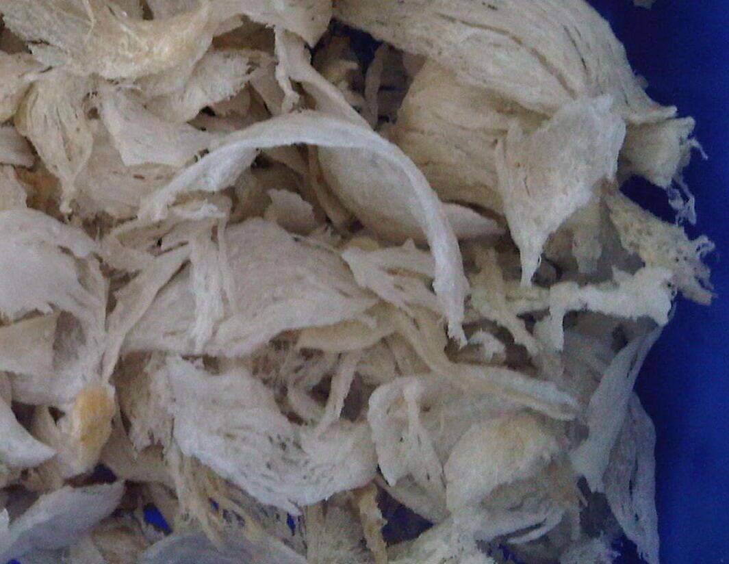 Jual / Sell Sarang Burung Walet ( birdnest )