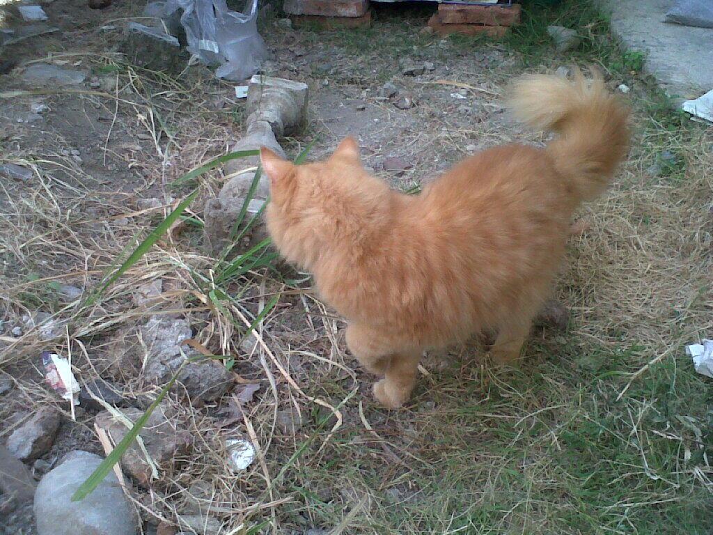 Jual Murah 3 Kucing Persia Dan Anggora Kandanng Jg Bisa