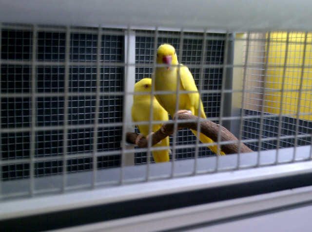 Sale Burung-Burung Import!!!!!!!!!!!!!!