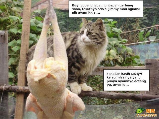 Gokil gan!! Kucing Lokal vs Kucing Impor