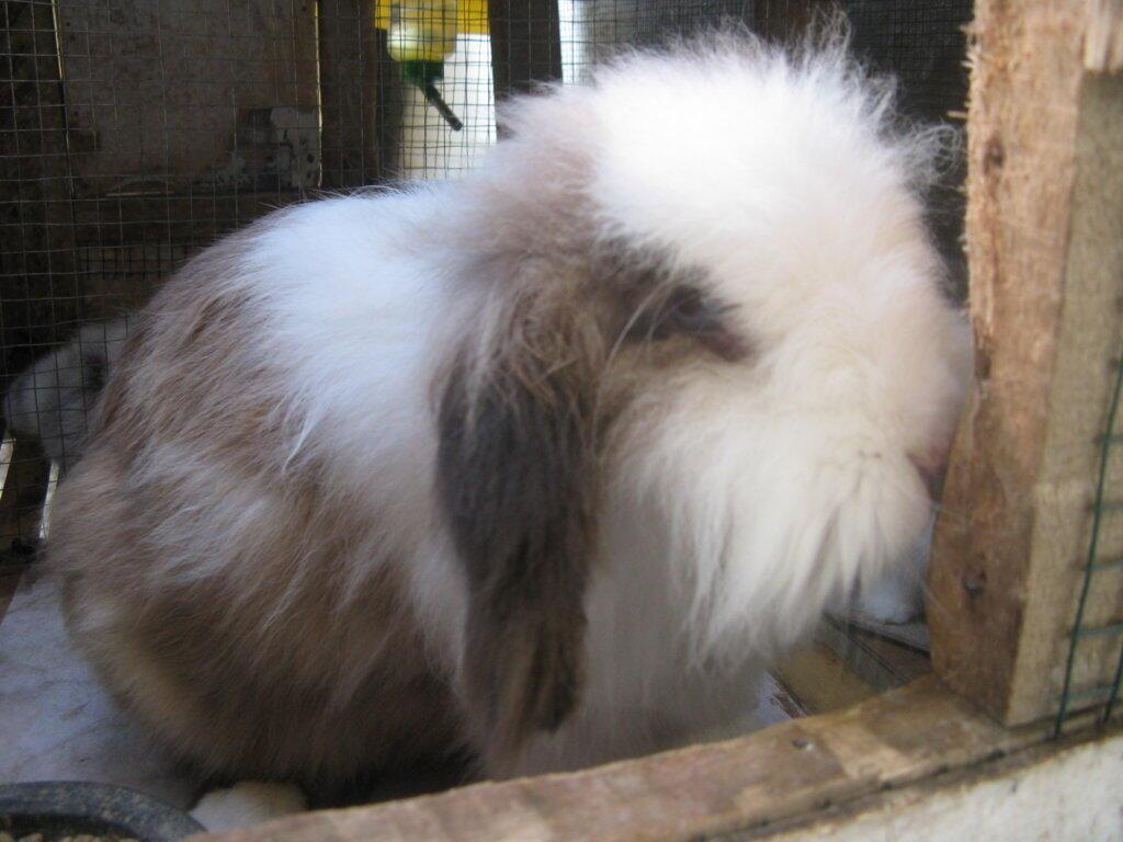 Kelinci Fuzzy Loop Murah (Mau Pensiun, Bandung Only)