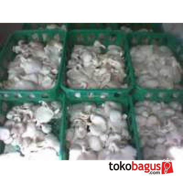 jamur tiram putih segar