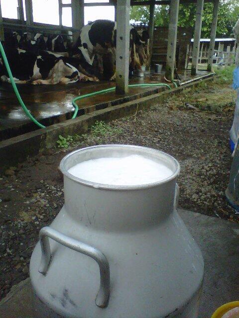 jual susu sapi murni mentah! antar sampai rumah (y)