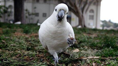Burung Peliharaannya Gemar Mengumpat, Wanita AS Diadili