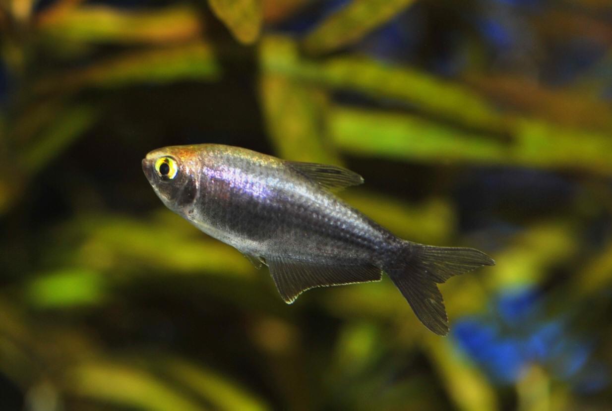 Aneka Ikan Hias