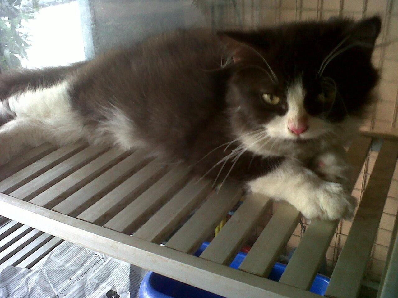 Kitten Flatnose dan Persia Medium Harga dari 2,5jt - 3,5jt nego !