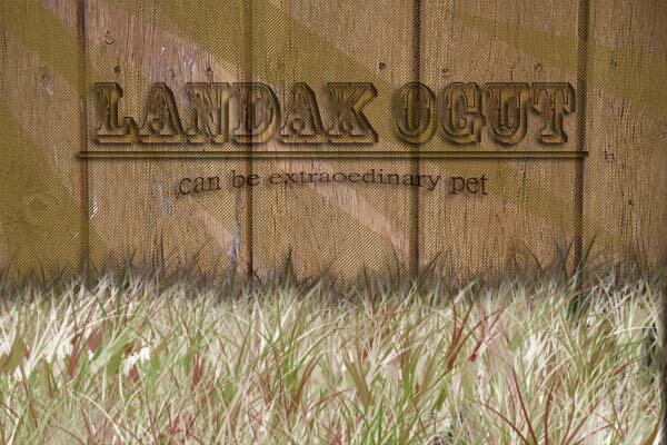 landak mini | www.landakogut.web.id