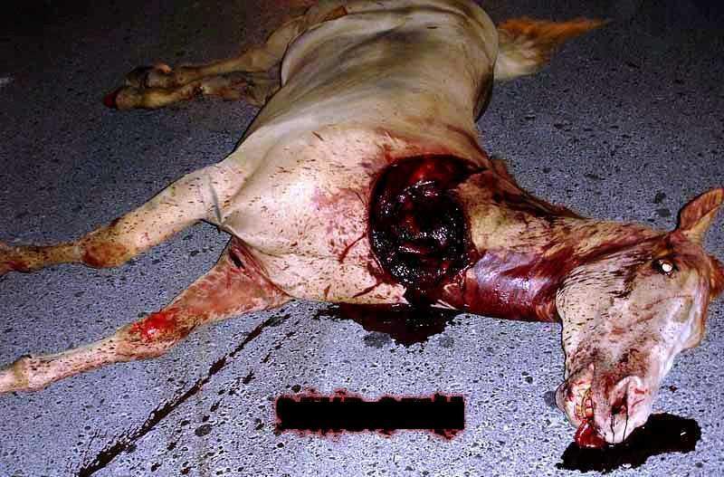 Horse & Rider dead dua-duanyaa..