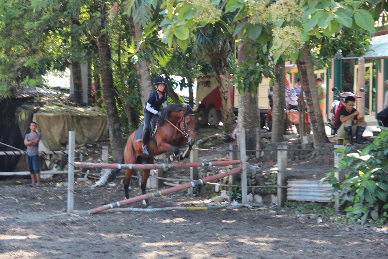 Horse school DI YOGYAKARTA
