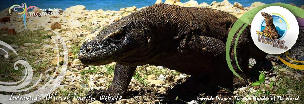 15 Paket Gratisan Berwisata ke Taman Nasional Komodo, Pulau Komodo