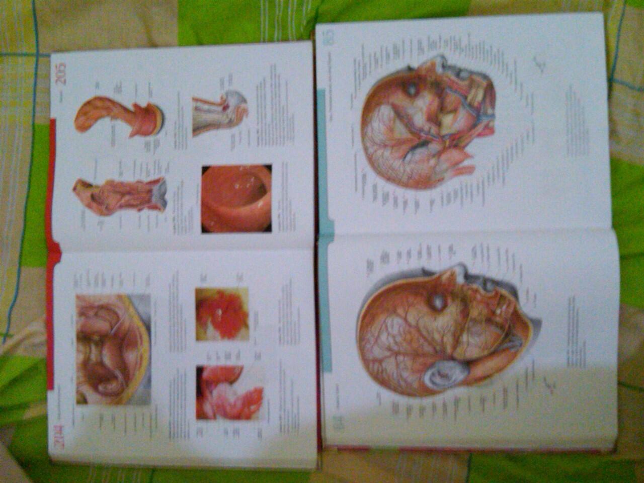 JUAL>2nd Atlas Anatomi Manusia Sobotta dan Kamus Kedokteran Dorland