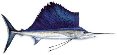 13 Jenis Ikan Kuwe Gt Giant Trevallyrs Kaskus