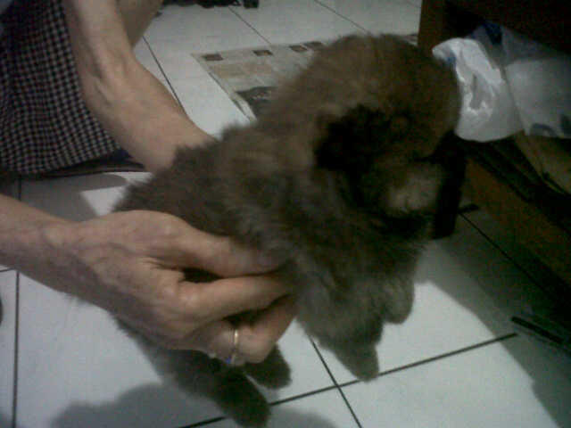 Jual Mini POM Stambum Bandung ...mantab gan