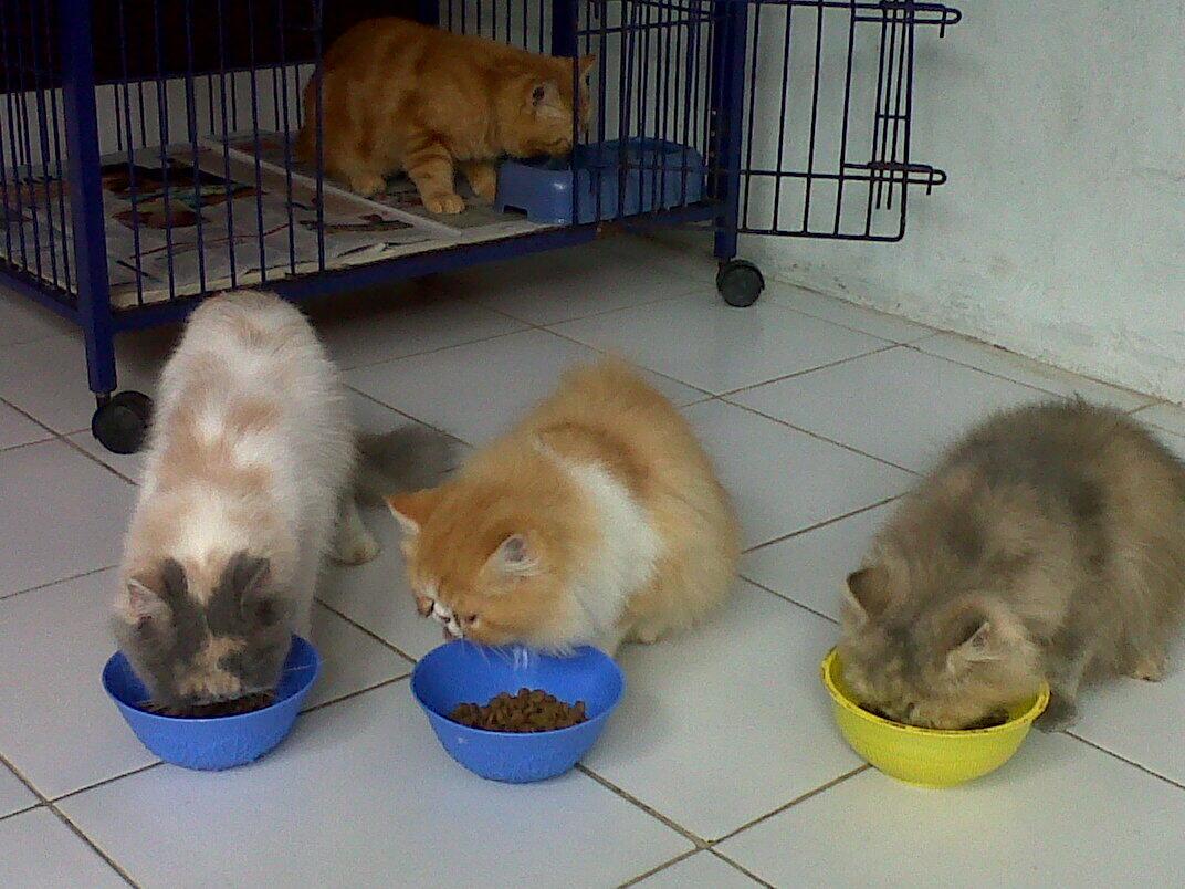 Penitipan Kucing Cinere - Depok