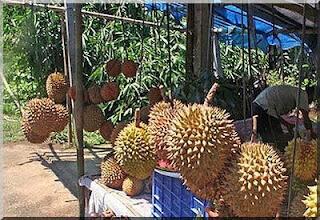 Lempok durian khas palembang kabupaten empat lawang