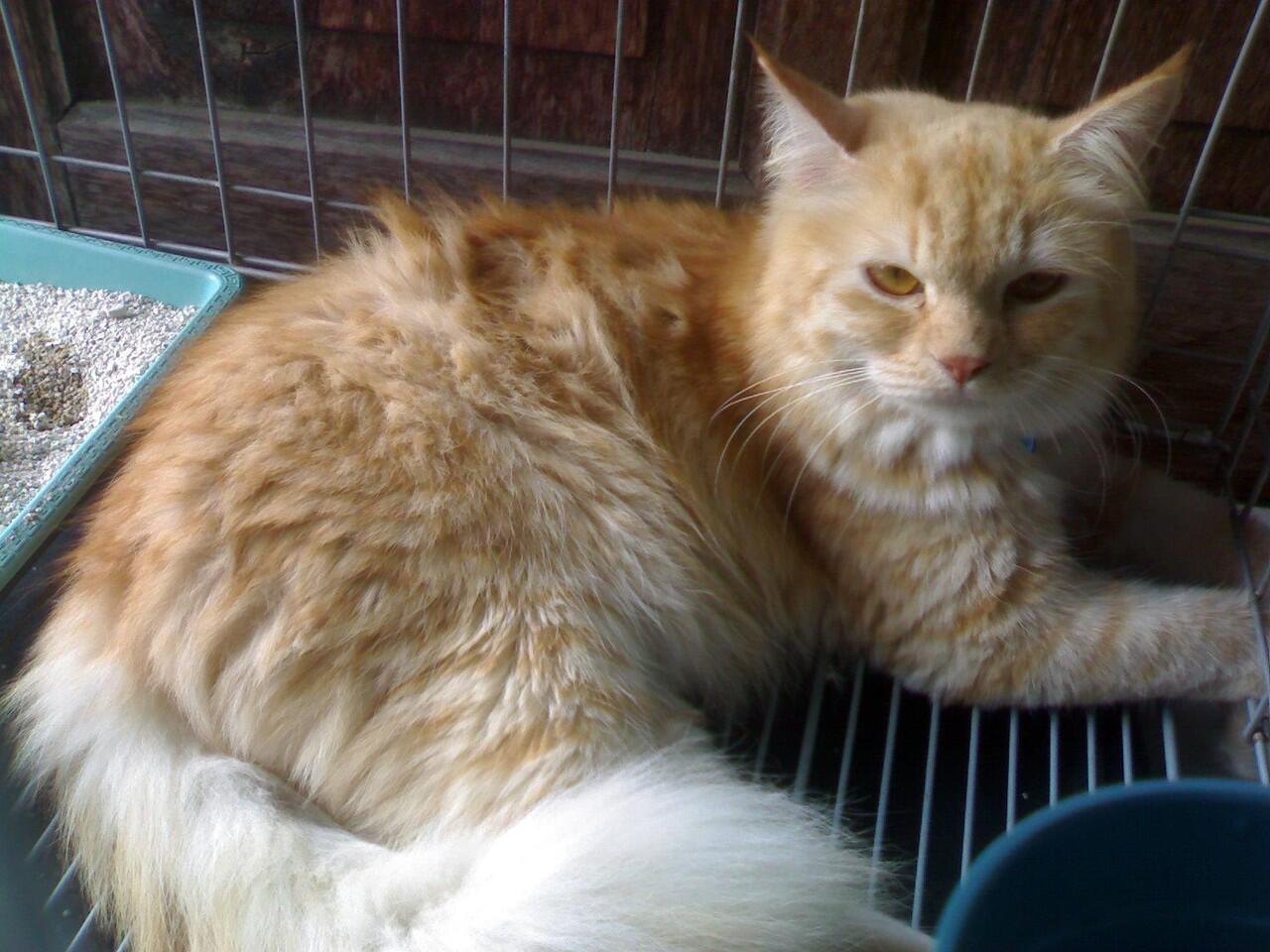 repost jual kucing anggora