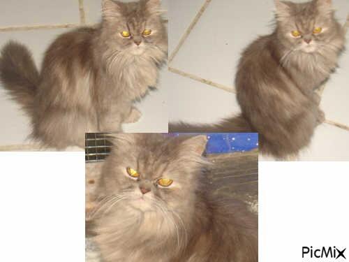 Persia Female Lucu