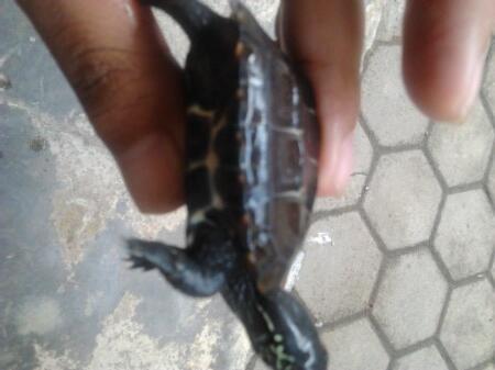 jual reptil murah