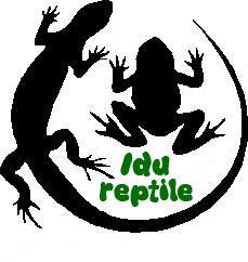 jual hewan reptil, kura-kura, Cst, ular, Phton, buaya, Nova dll