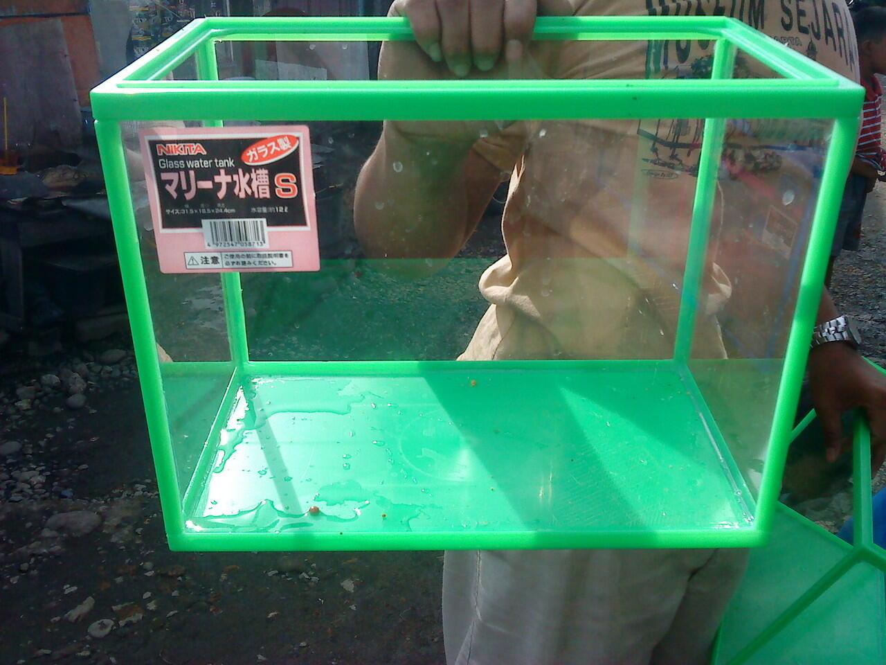 akuarium untuk ikan landak mini hamster dan reptil