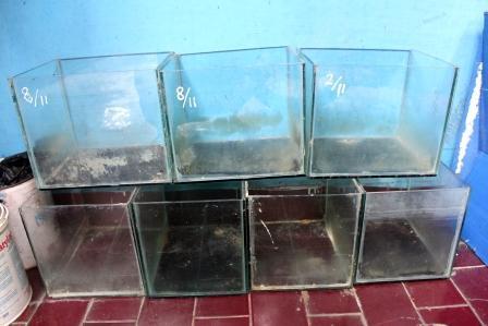 aquarium bekas hamster