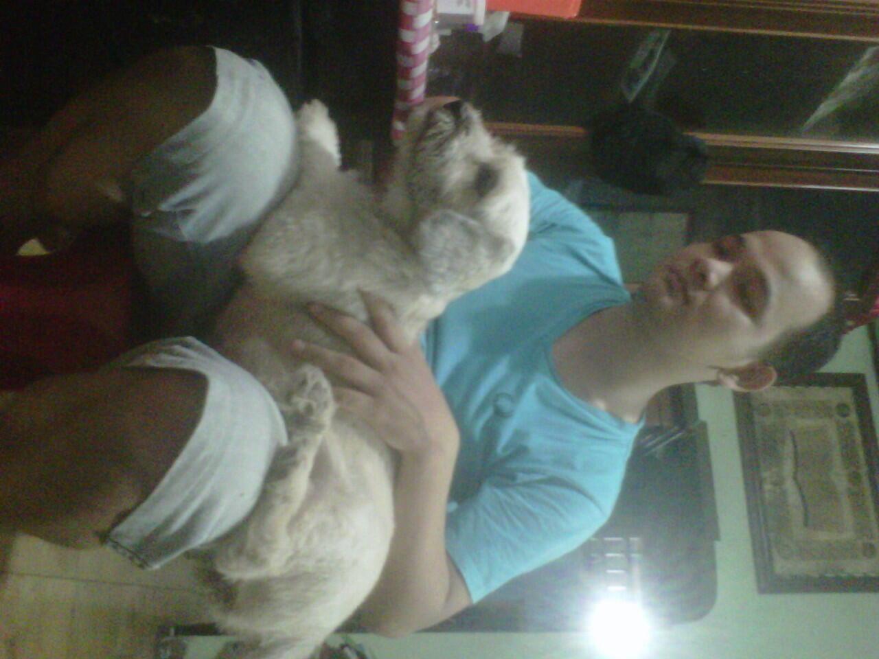 puppy maltese-shih tzu usia 3 bulan (28 agust 2012) dan induknya usia 2 tahun.