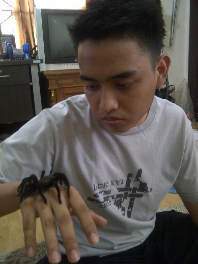 jual tarantula *bisa dihandle gan*
