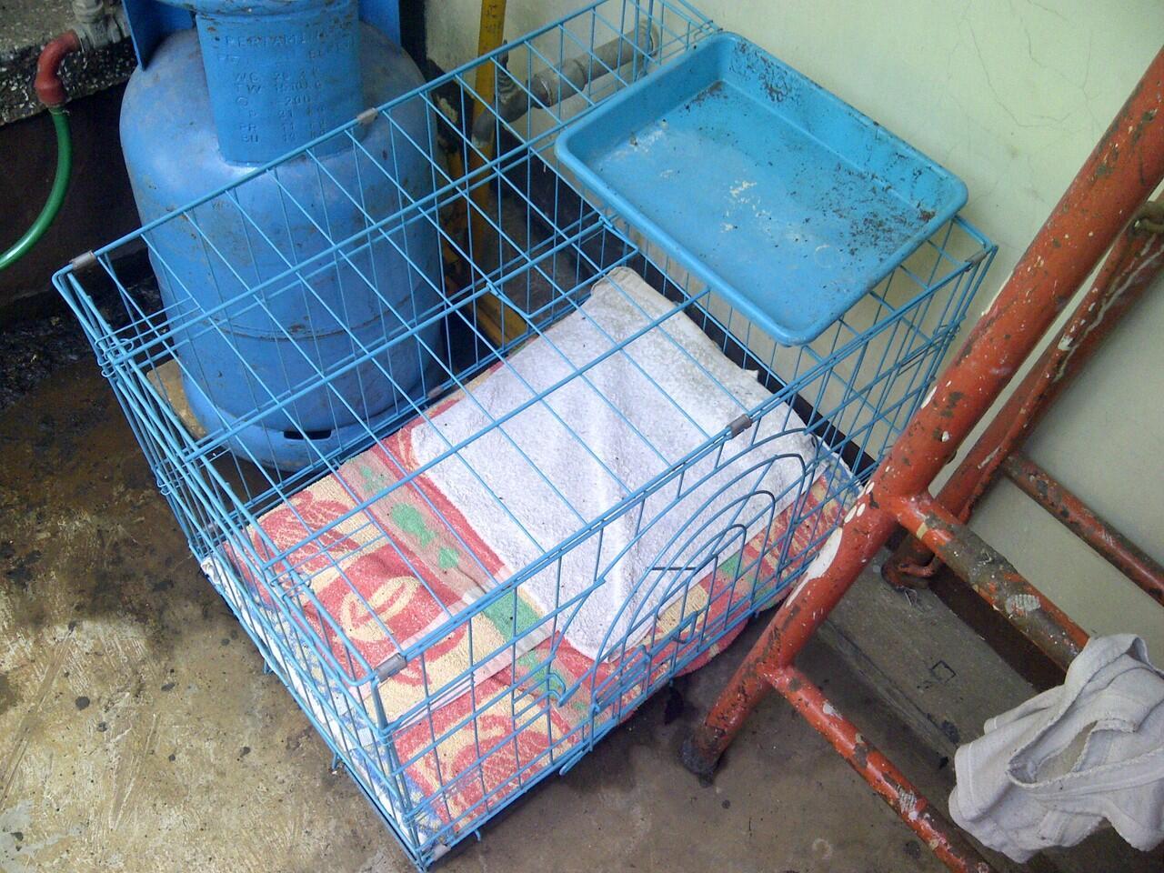 Dijual Kucing Anggora 1 tahun BANDUNG banyak bonus++