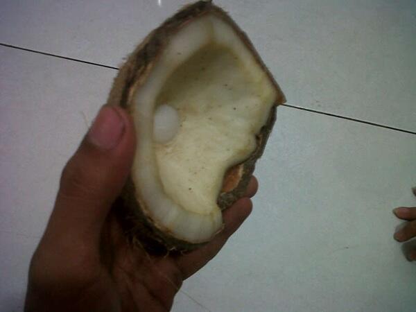 Batu mustika kelapa asli!!! Best Offer!
