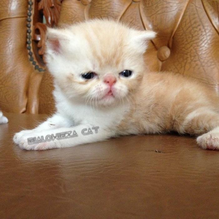 = BIALOWIEZA CAT FAMILY=