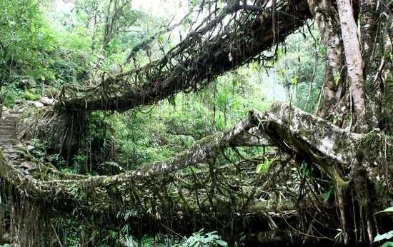 10 Pohon Teraneh Di Dunia