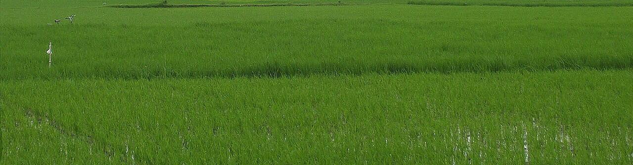 Tanah sawah seluas 5271 m2, dekat kantor PEMKOT Cimahi Utara. Bandung